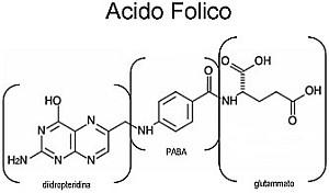 cibi-ricchi-di-acido-folico-proprietà-acido-folico