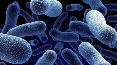 probiotici8