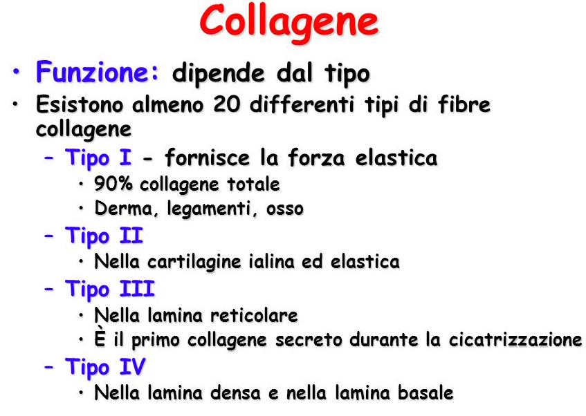 Collagene+Funzione-+dipende+dal+tipo