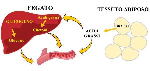 Ketogenic-diet_grande.jpg