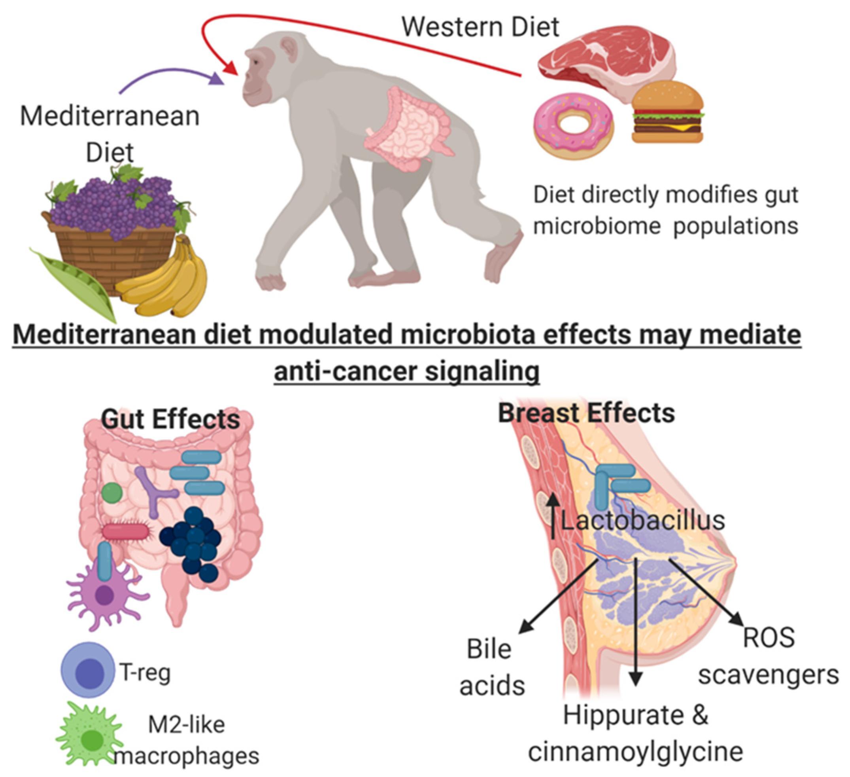 Cambio del microbiota mammario con dieta mediterranea e occidentale
