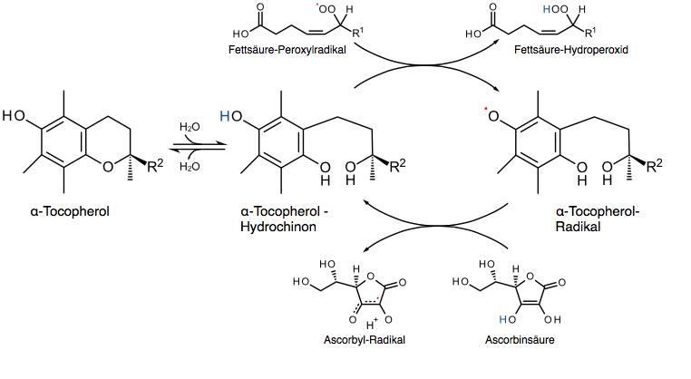 Figura 12 - Rigenerazione biochimica generata dalla vitamina C sulla molecola ossidata di vitamina E