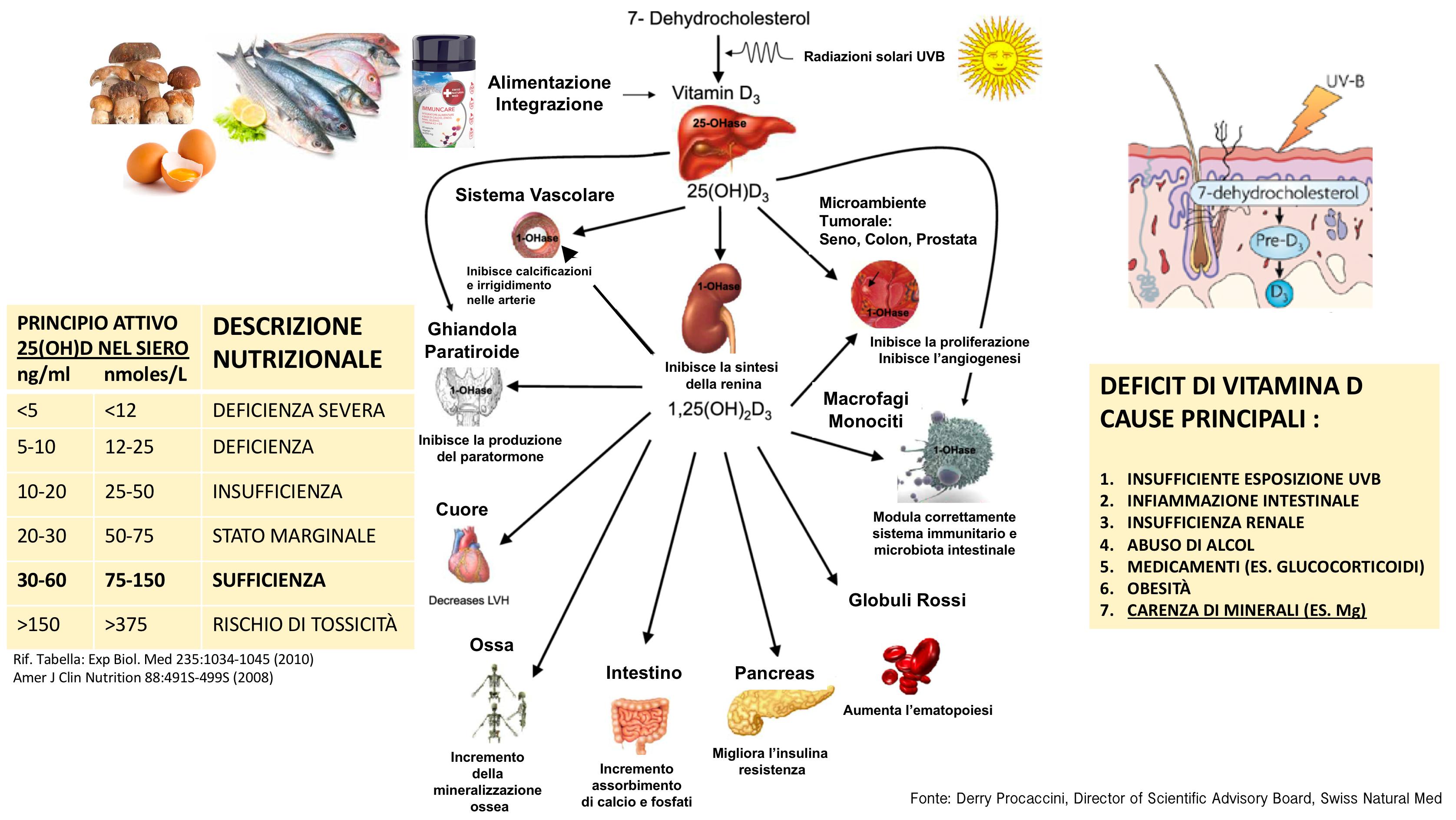 Figura 19 - Vitamina D alimenti - Esposizione al sole - Deficit Nutrizionale